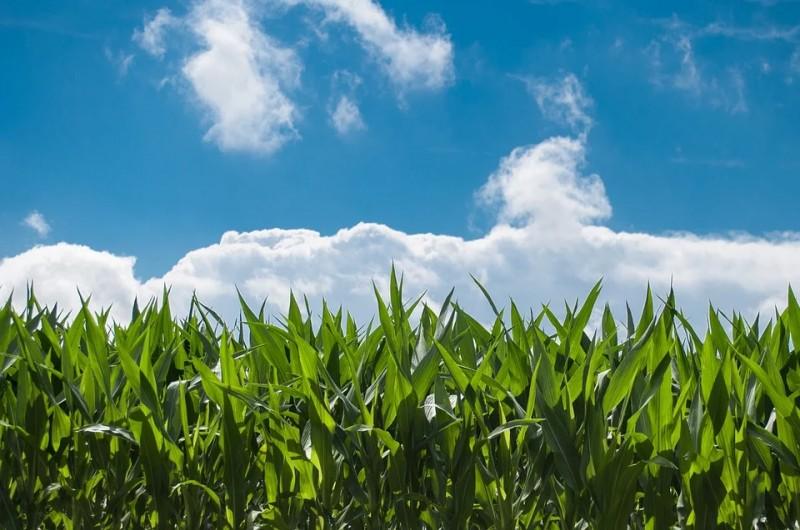 Covid-19: Governo mantém redução de ICMS para fertilizantes e defensivos