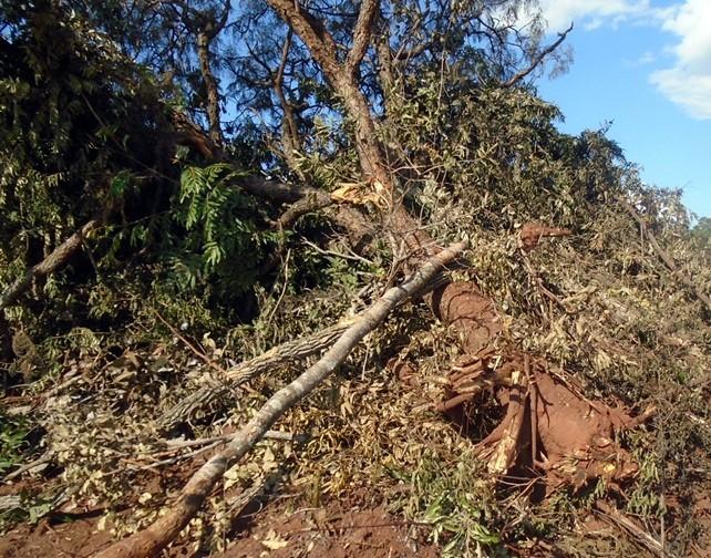 PMA autua proprietária rural por derrubada de árvores em área de pastagem