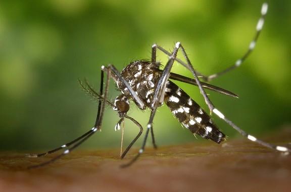 Casos de dengue dobram na última semana em MS