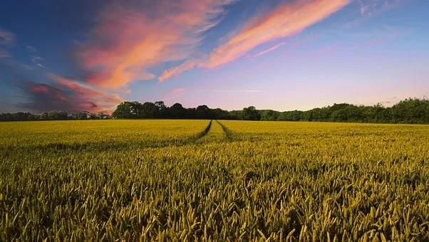 Área agrícola cresce em dois anos e ocupa 7,6% do território nacional