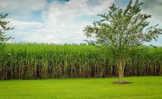 Projeto que proíbe plantação de cana-de-açúcar no Pantanal será votado hoje