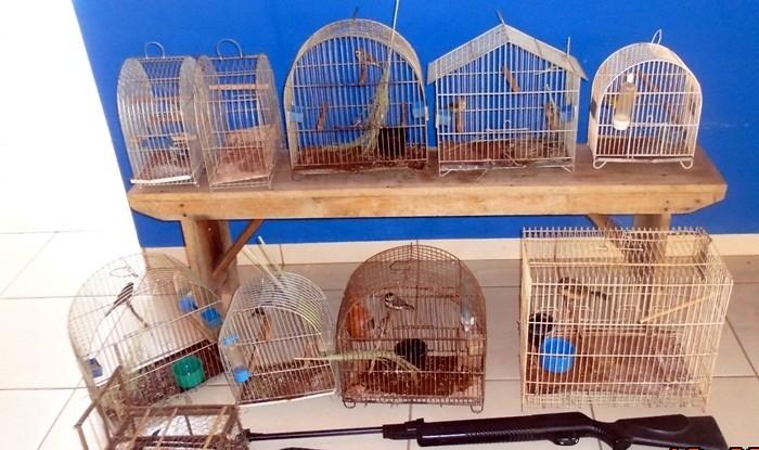 PMA autua infrator por manter aves silvestre ilegalmente em cativeiro