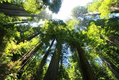 Semeadura direta é ferramenta eficaz para a restauração ecológica em SP
