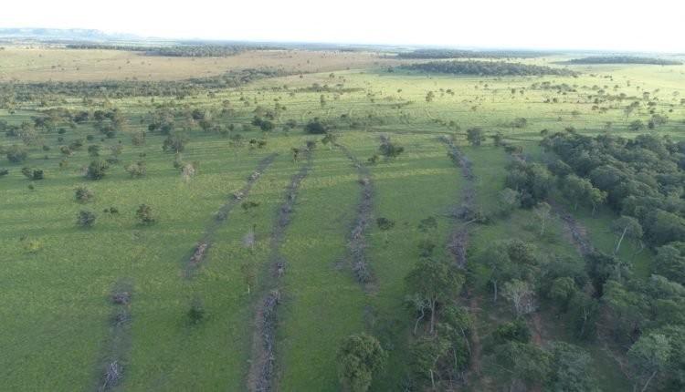 Homem é multado e autuado pela PMA de Costa Rica por desmatamento ilegal