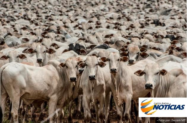 Abate de bovinos cai 9,5% e soma 7,69 milhões de cabeças no 3º tri, diz IBGE