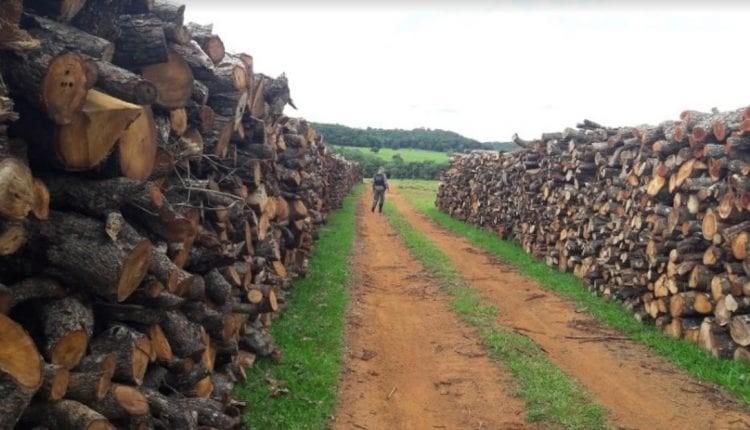 Dois são multados em R$ 50 mil por licença falsa para exploração de madeira
