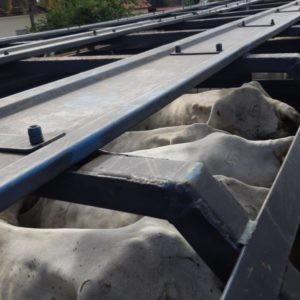 Polícia Civil recupera gado roubado em fazenda de Uruaçu