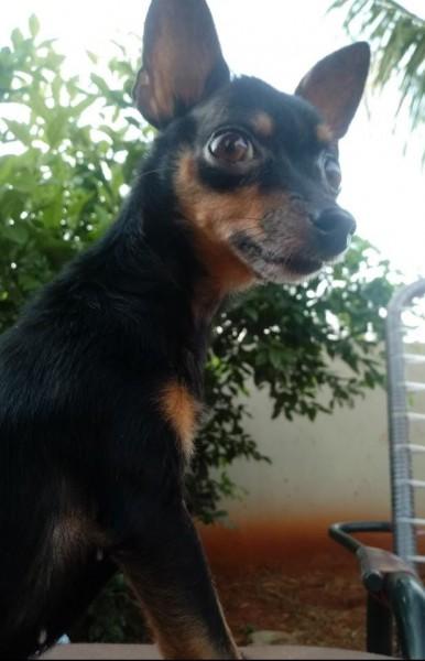 Fotogaleria: ajudem a achar a Bolinha