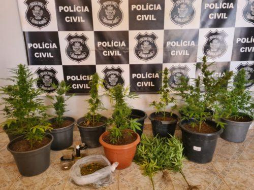 Polícia Civil prende suspeito de cultivar drogas em casa, em Alto Paraíso