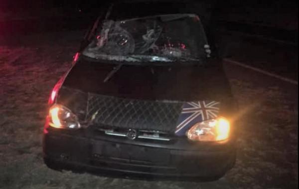 Fotogaleria: égua no meio da pista causa acidente em rodovia