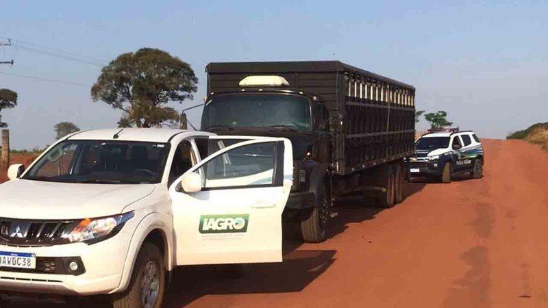 Caminhões com gado sem origem são interceptados em na fronteira em MS