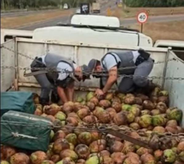 Polícia encontra mais de 700 quilos de cocaína escondida em carga de coco