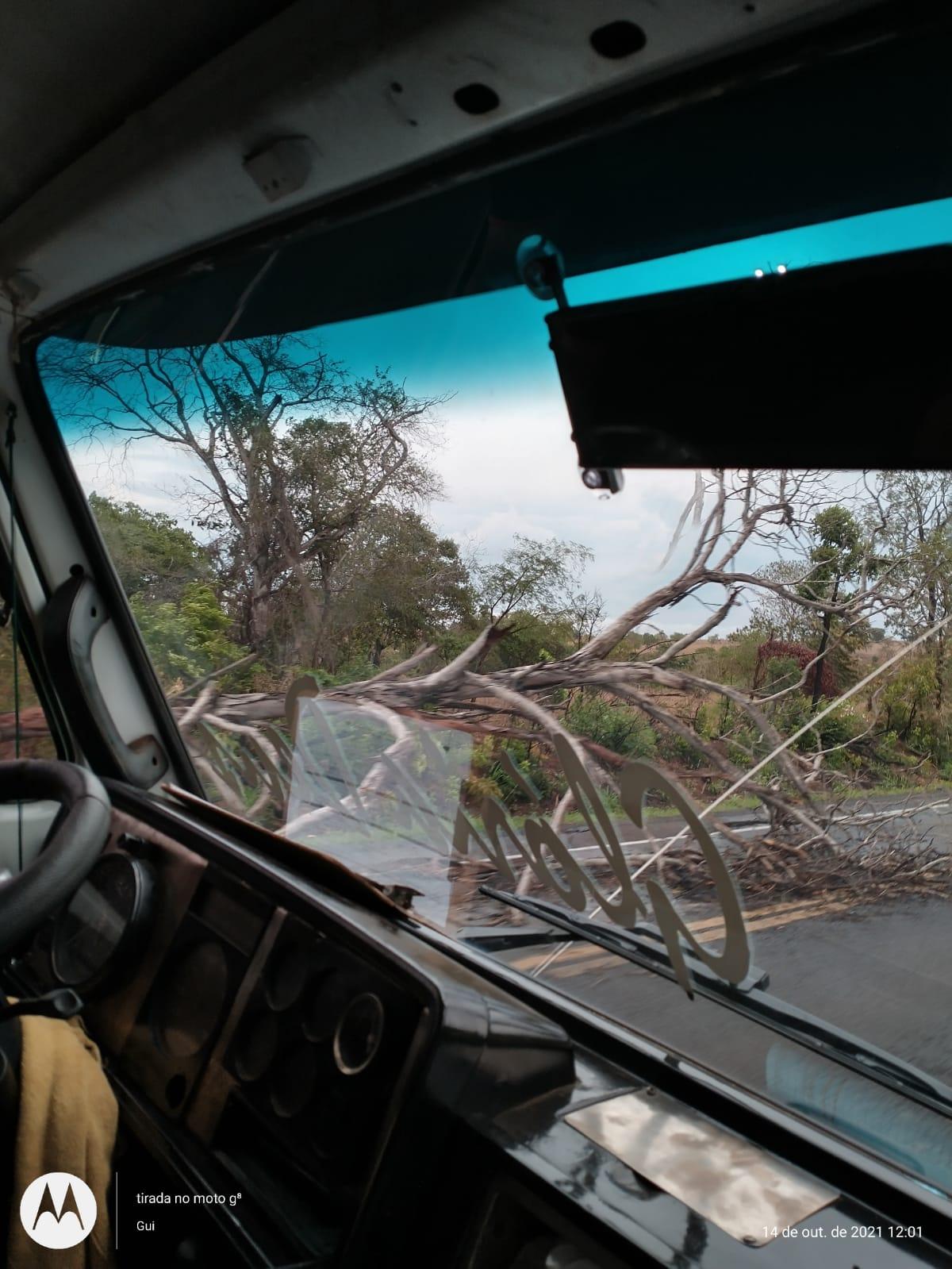 Cassilândia/Paranaíba: temporal derruba árvores na BR 158